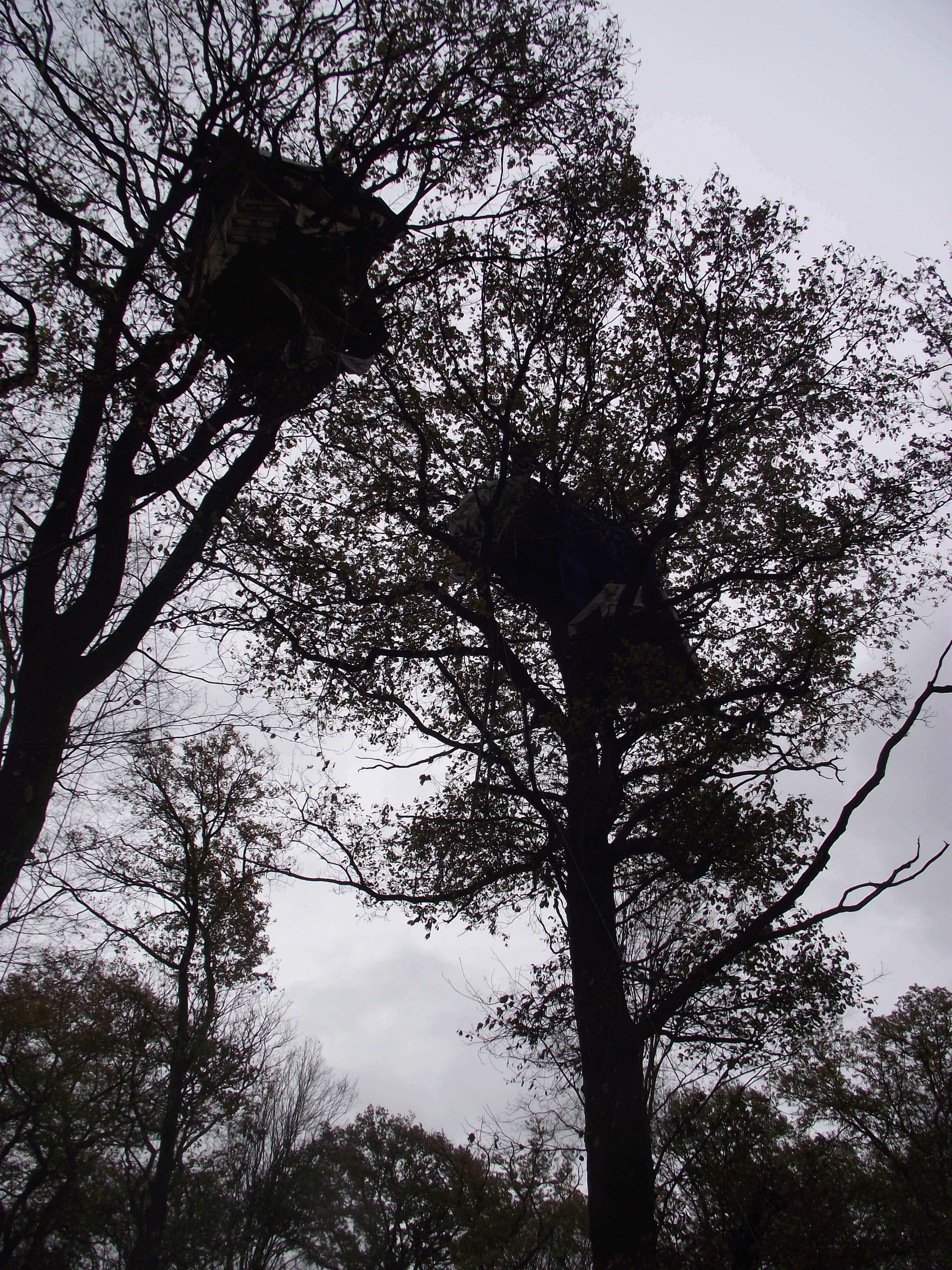 Waldbesetzung